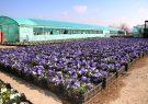 آغاز کاشت ۷۰۰ هزار بوته گل فصلی توسط شهرداری منطقه۴ تبریز
