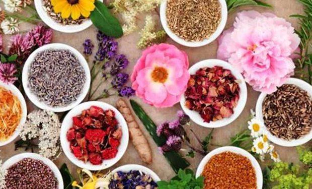 تیشه بر ریشه گیاهان دارویی