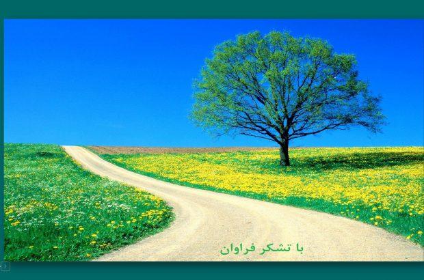 تولید۷/۲۹ تن بذر پرورشی ۳ و مادری اصلاح شده گندم در مرکز رشد فناوری مرکز تحقیقات و آموزش کشاورزی و منابع طبیعی آذربایجان شرقی