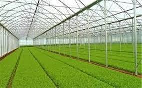 رتبه نخست آذربایجان شرقی در توسعه گلخانه ها درکشور
