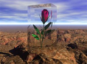 نقش عشق در ادراک و هدایت زندگی