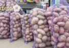 تولید ۵.۵ میلیون تن سیب زمینی در کشور/ رشد ۸۳ درصدی صادرات سیب زمینی به بازارهای هدف