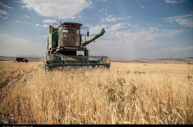 آغاز خرید تضمینی گندم در آذربایجان شرقی