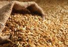 پیش بینی تحقق بیش از ۵۰ درصد برنامه تولید بذر جو در شرایط خشکسالی